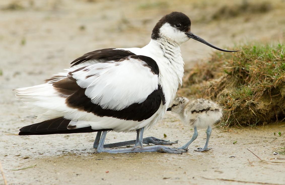 Kluut kijk op vogels - Foto van keukenuitrusting ...